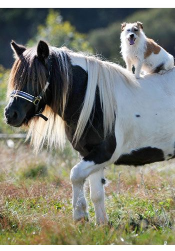 We'd like to think that after this photo, the Shetland Pony and Cowboy-esque dog rode off together into the sunset.