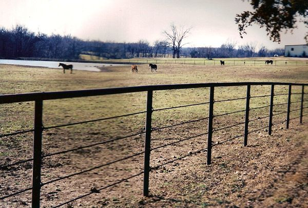 11 Best Cattle Fencing Images On Pinterest Horse Fencing