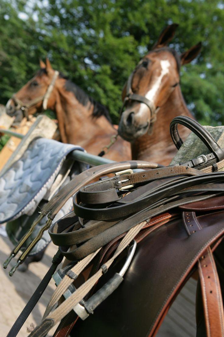 Uw paard compleet verzorgd