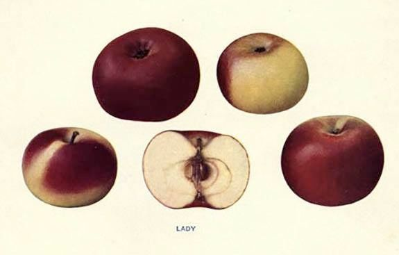 The Esopus Spitzenburg, Thomas Jefferson's favorite apple variety: 100 years ago, people were eating things that most of us will never taste. So what happened?