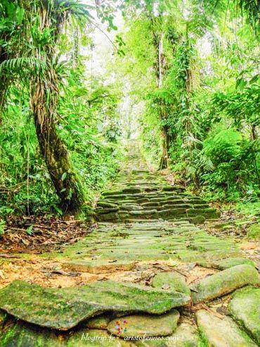 Chemin vers la cité perdue. De l'autre côté de la rivière, un chemin en pierres est apparu dissimulé par la végétation. 1600 marches en pierre forment le chemin d'accès   aux ruines.  http://blogtrip.fr/visiter-la-cite-perdue-tayrona-colombie/
