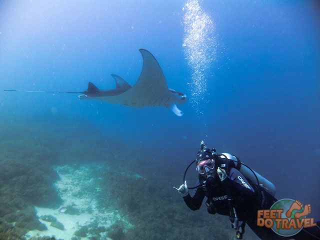 rare large shark sighting while scuba - 640×480