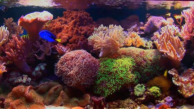 Turn your television into a fireplace or an aquarium. 8 wonderful aquariums to choose from. all filmed using high quality Full HD cameras, to turn your television into a spectacular aquarium... Eight very different aquariums to suit every TV and every situation