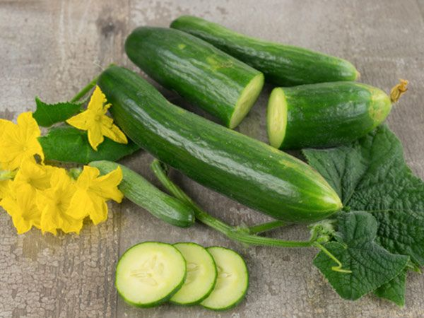 55 day. Burpless slicing cucumbers, free from bitterness, that has been popular for over 80 years!  A fine burpless cucumber seed.