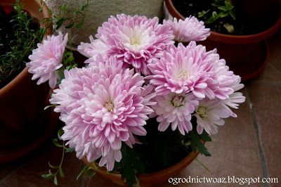 Ogrodnictwo od A do Z: Kwiaty na balkon i taras- część I