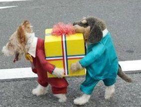 best Hundekostüm ever!