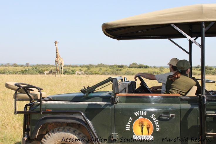 Experience game drives at Mansfield Reserve. Mansfield Reserve Port Alfred.