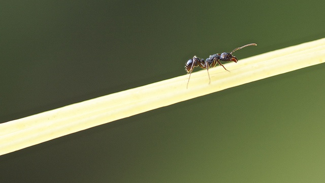 Ant and Spaghetti by Tonyfoster, via Flickr