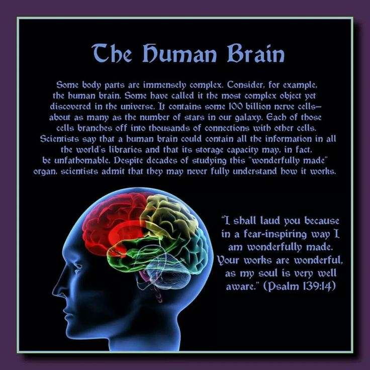 "The Human Brain //  Some body parts are immensely complex. It contains some 100 billion nerve cells—about as many as the number of stars in our galaxy. Each of those cells branches off into thousands of connections with other cells. Scientists say that a human brain could contain all the information in all the world's libraries and that its storage capacity may, in fact, be unfathomable.   Your works are wonderful, as my soul  is very well aware.""  (Psalm 139:14)"