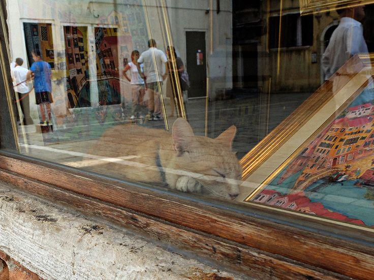 Il gatto nel ghetto.