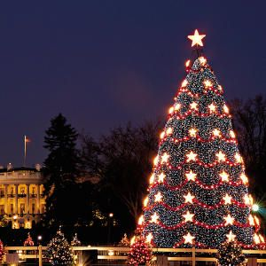 I try to go every year with friends/family. Christmas tree in front of White House with small trees and trains surrounding it. Wish the reindeer were still there