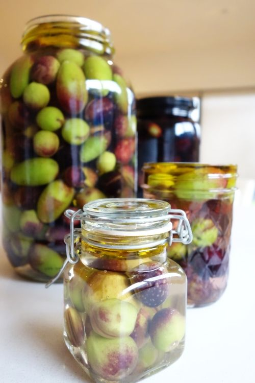 How to brine your own olives