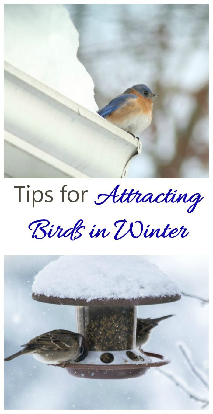 These tips for attracting birds in winter will make sure that your yard has lots of feathered friends all year long. #attractingbirds #feedingbirds
