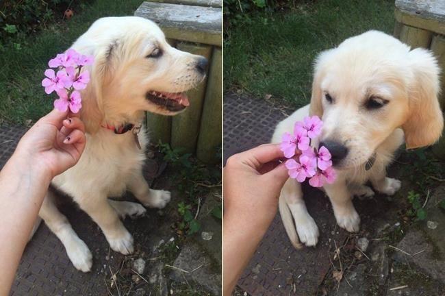 Sanatlı Bi Blog Köpek Yavruları ve Çiçeklerin Birleşiminden Oluşan 30+ Sevgi Dolu Fotoğraf 38