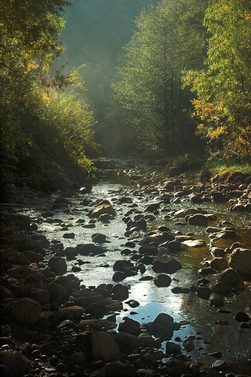 This is Tonto Creek in Arizona, but it reminds of the creek near where my grandparents farm was located in NE Arkansas. Remember traversing up and down the creek banks as a kid.