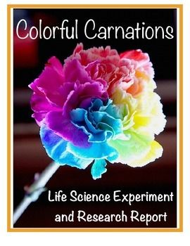 Students will love this investigation and experiment exploring a plant's life cycle. Create a rainbow carnation garden from white carnations and food coloring. Meets Common Core Standards. This packet includes all the essentials plus optional expansion materials that is common core aligned.  Student worksheets focus on a step by step approach to the scientific method. There are several opportunities for cooperative learning in small groups.