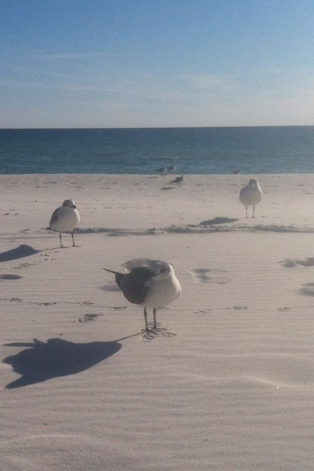 13 best images about destin on pinterest fishing for Fishing destin fl