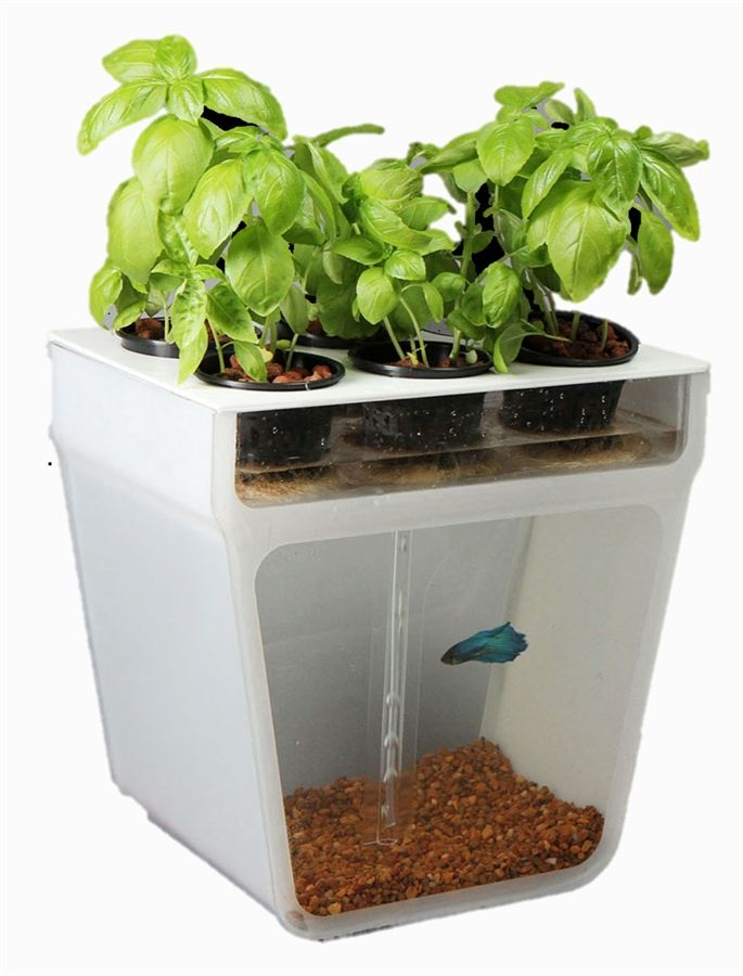 Home Aquaponics Garden- A Beautifully Simple & Closed-Loop Ecosystem Right on Your Table- I want one!