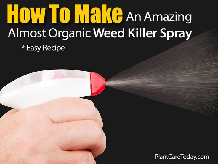 12 best images about no more weeds or ants on pinterest gluten households and dandelions - Fight weeds with organic solutions practical tips in the garden ...