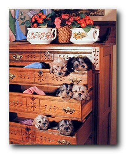 This beautiful poster captures cute puppies in Drawers looking at you. They look very cute and innocent, It is a perfect art print puppies poster to decorate your walls, and easy to frame. We offer you a high quality poster with beautiful color accuracy.