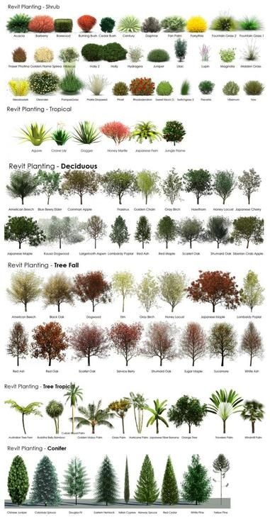 Revit RPC Tree and shrub Guide- landscaping idea