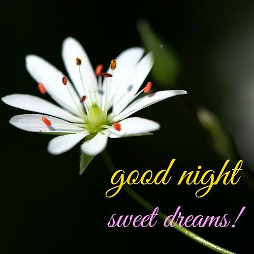 Good night beautiful!!!!! Hope you sleep well and have the sweetest of dreams!!!!!!! Love you always beautiful!!!!!!!!