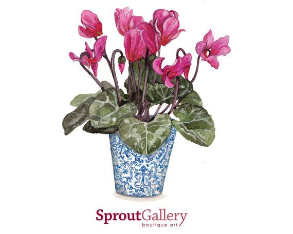LARGE  REPRODUCTION PRINT  - Pink Cyclamens in blue and white pot -  print of my original watercolour painting code: SPG024
