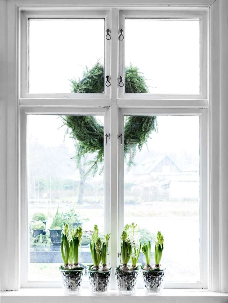 Vita hyacinter är en favorit som blir bedårande i glaskrukor på rad, särskilt i kombination med kransen på utsidan.