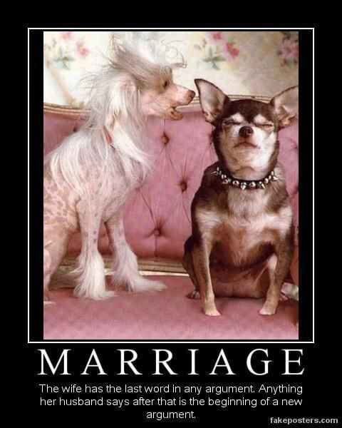 .: Puppies, Animal Kingdom, Pet Peeves, Funny Woman, Marriage, Fit Men, Chihuahua, Dogs Funny, Funny Memes