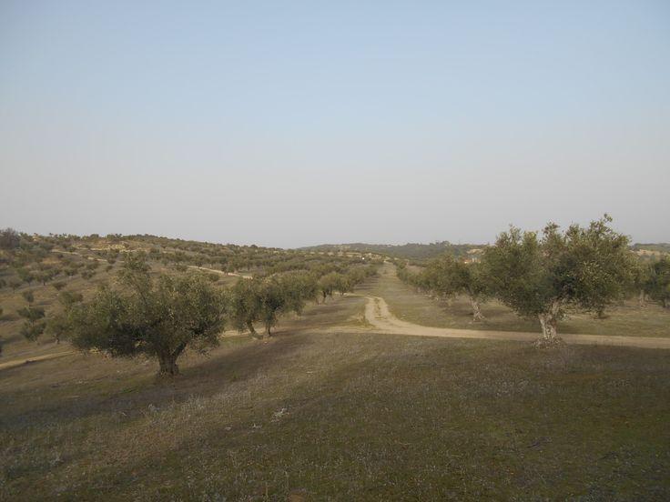 Camino de subida al Castillo de Villalba