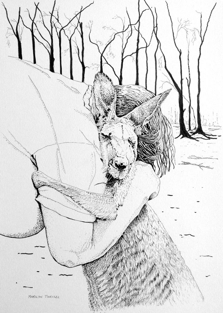 After the Fire, black and white artist pen, to remember the devastation fires in South Australia. Done from a local newspaper photo of the rescuer and kangaroo.