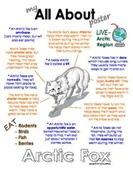 """This """"All About"""" book will be a fun addition to your classroom and lessons on Arctic foxes. Other Polar/Arctic animal books available are: Polar Bear, Walrus, Emperor penguin, caribou, Arctic wolf, Arctic hare, puffin, Beluga whale and snowy owl. Please see my store for more of my products. http://www.teacherspayteachers.com/Store/Courtney-Mckerley"""