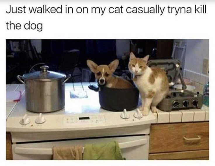 literally just a whole big heap of hilarious cat memes 23 Literally just a whole bunch of hilarious cat memes in honor of International Cat Day - Tap the link now to see all of our cool cat collections!