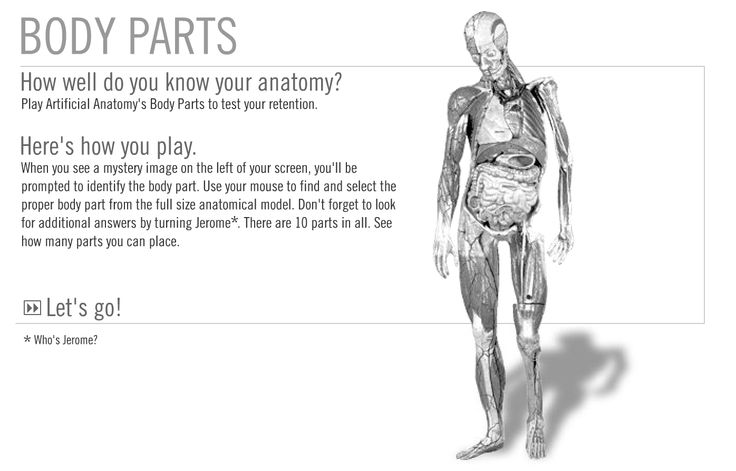 How well do you know your anatomy? Try out this fun