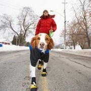 Many dogs have sensitive feet because of breed, exposure to the elements, allergies or past experiences. If humans walked around barefoot all the time, we too might have sensitive feet. In the winter in particular, a dog's paws are exposed to extreme cold and are prone to forming balls of ice between the toes, trapped by the fur. During other...