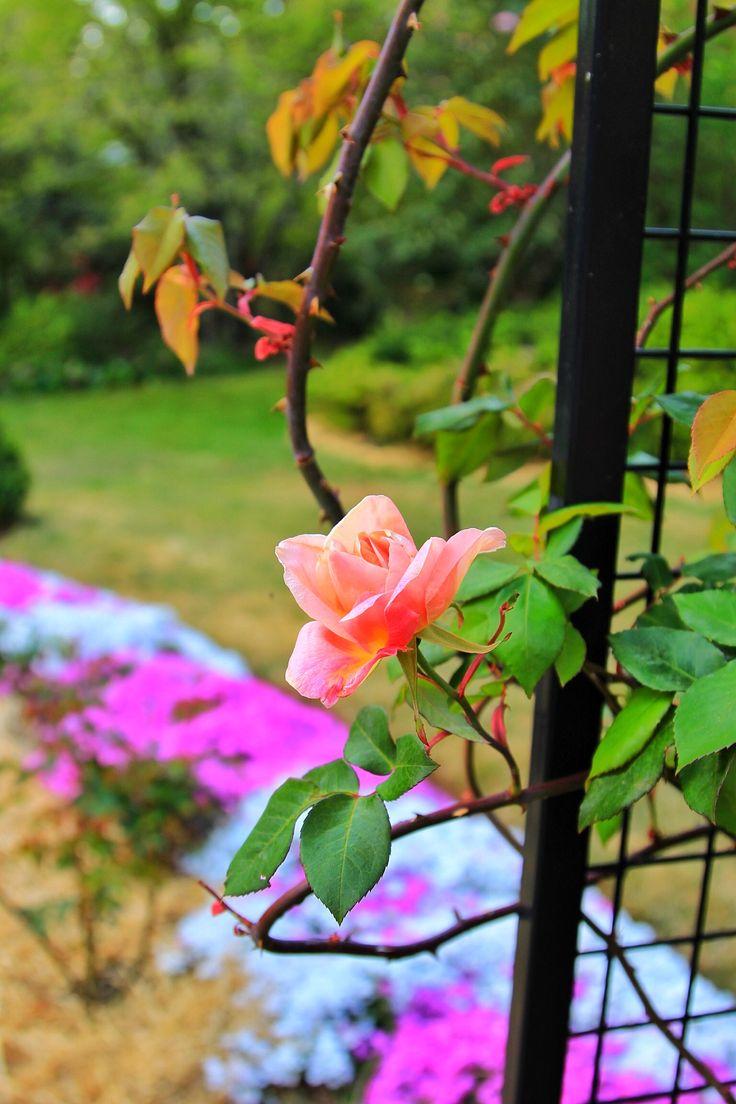 Nooroo garden