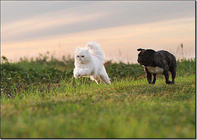 Интересные факты о кошках и собаках.  Считается, что предками собак были волки, которые приходили к поселениям людей. А предком кошки была сама кошка. Чтобы укрепиться кошке, как постоянному виду животного понадобилось 12 миллионов лет.