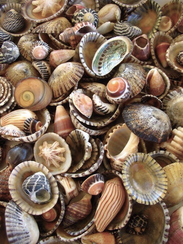 Shells.....cockles and muscles!!
