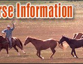 Basic Horse Care Information and Guidelines