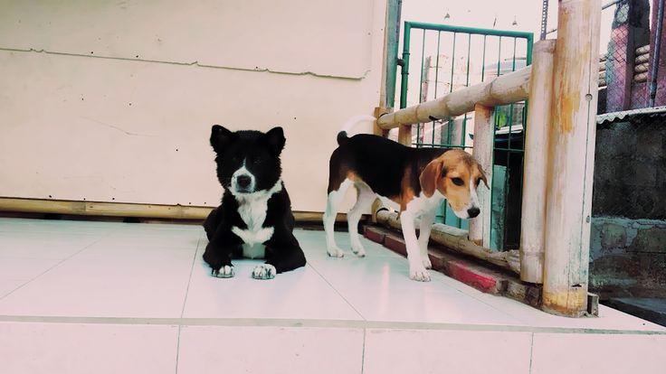 Harray Dog Stay にて……