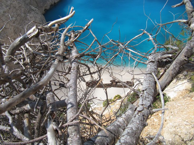 Which famous shipwreck is hidden behind the branches? #Zakinthos