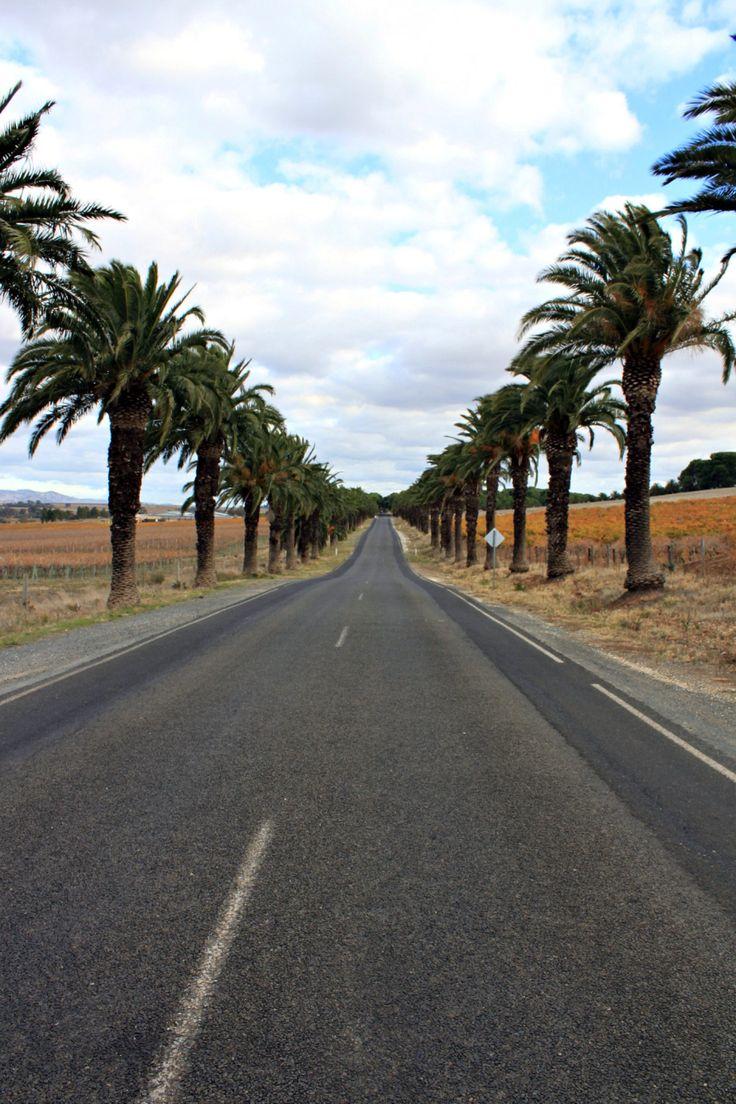 Barossa Valley, Australia. Photo by Chantal Conway