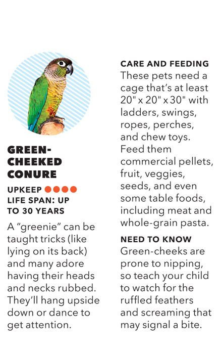 Everything you need to know about getting a pet green-cheeked conure. #Pets