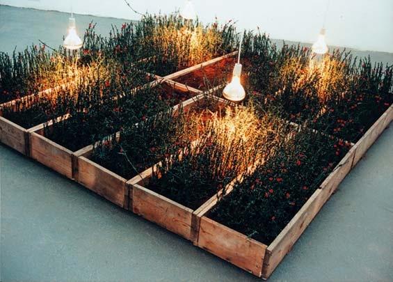 krzysztof m. bednarski, trawa, tylko trawa, 1996, drut kolczasty powlekany zielonym plastikiem (1800 m), wata bawełniana barwiona na czerwono, torf