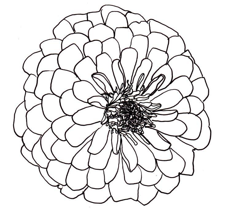 Line Drawing Flowers Dahlia Drawings Flower Line