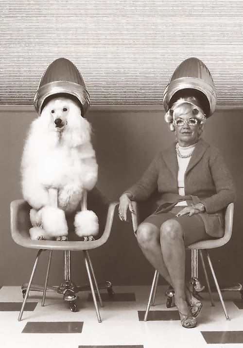 Woman and poodle under the hairdryer #hairsalon #beautyparlor - Carefully selected by GORGONIA www.gorgonia.it