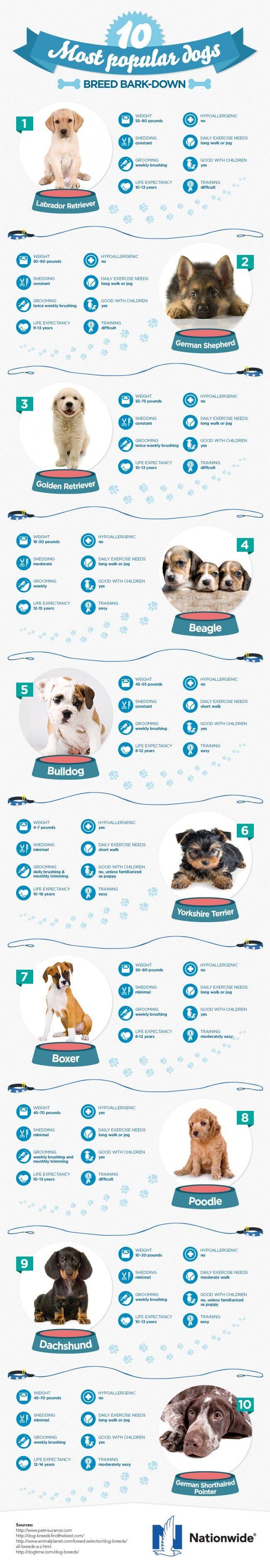 Mejores 197 imágenes de Puggle en Pinterest | Animales, Perritos y ...