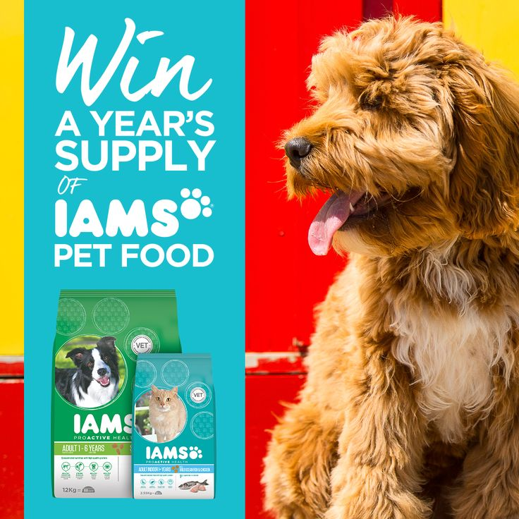#WIN! A Year's supply of Iams food for your #dog or #cat. Simply purchase any 2.55kg+ of IAMS cat food or 12kg+ IAMS dog food between now and the end of March to go in the draw.