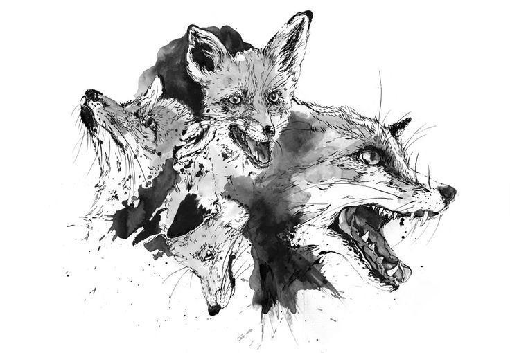 ink drawing foxes by sylvia stolan
