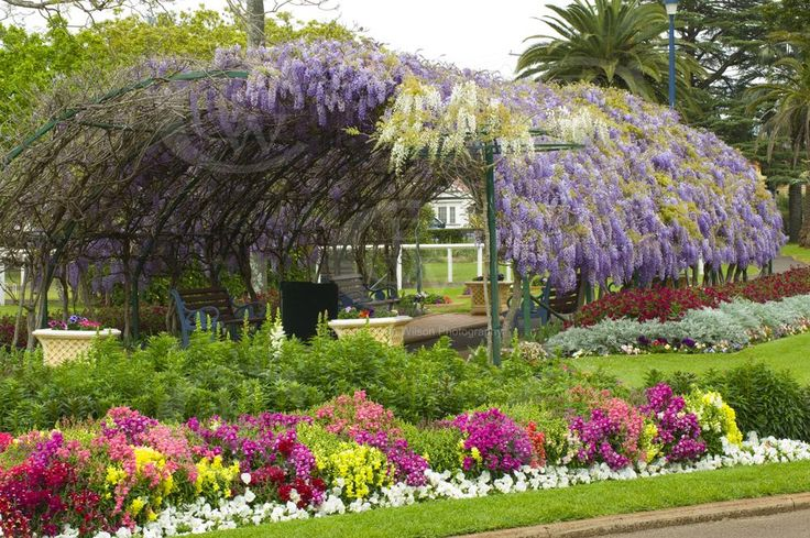 Laurel Bank Park Toowoomba QLD. A place to relax while traveling to Brisbane. A wisteria covered archway to take a walk through.